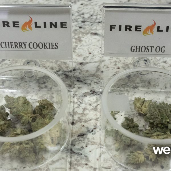FIRE LINE SAMPLES