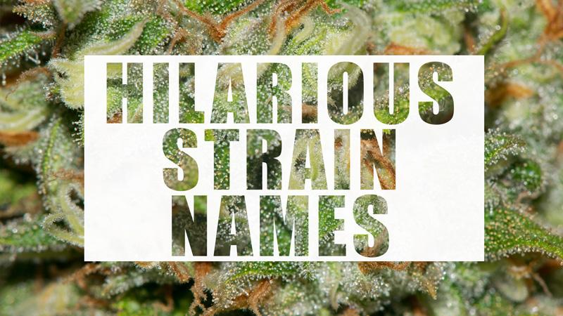hilarious strain names puget sound marijuana